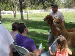 Alpacas For Sale: California