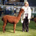 sold Alpaca herdshire