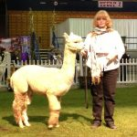 Alpaca judging contest