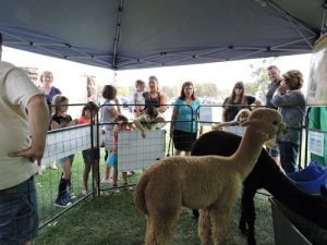 Arapaho Rose Alpaca Booth at Honey Bee Festival California